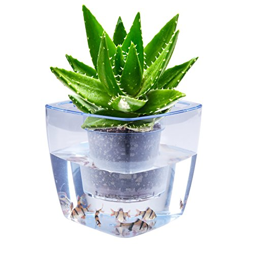 Water Herb Garden, Aibis Hydroponics Growing System, Organic Self Watering Planter Indoor Sprouts Gardening Starter Kit Aquaponics Small Fish Tank, Best Gift Set For Women And Kid, Seeds Not Included