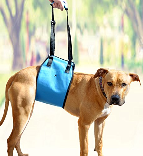 Amzpets X Small Dog Support Sling. Lifting Harness Helps Injured Canines With Weak Front Or Rear Legs Stand Up, Walk, Get Into Cars Using Ramps, Climb Stairs. Best Alternative To Dog Wheelchair